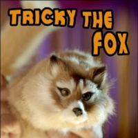 Tricky The Fox Spring Animal like Rocky Raccoon